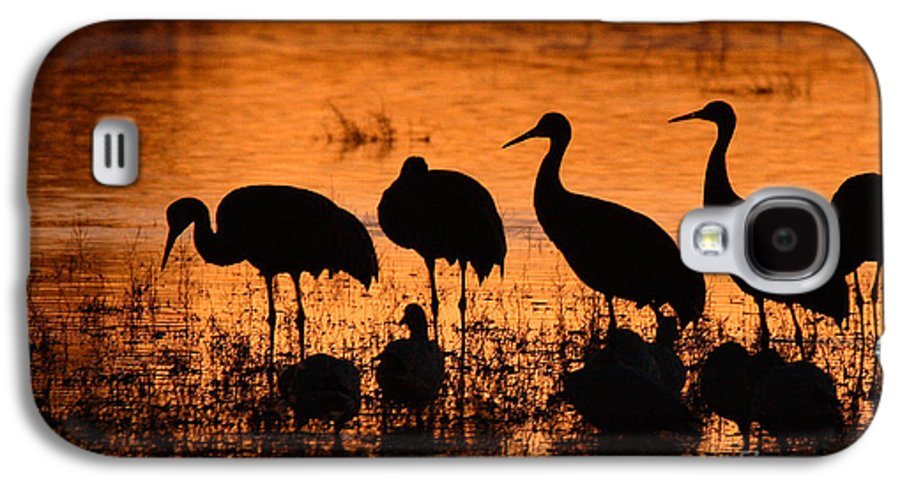 Crane Galaxy S4 Case featuring the photograph Sunset Reflections Of Cranes And Geese by Max Allen