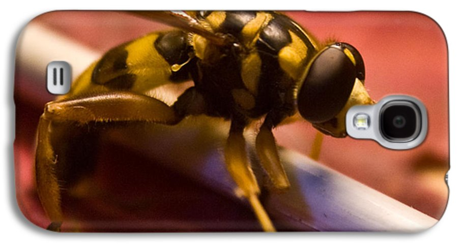 Insect Galaxy S4 Case featuring the photograph Syrphid Fly Poised by Douglas Barnett