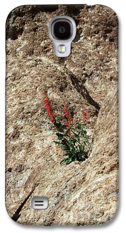 Wildflowers; Flowers Galaxy S4 Case featuring the photograph Tenacity by Kathy McClure