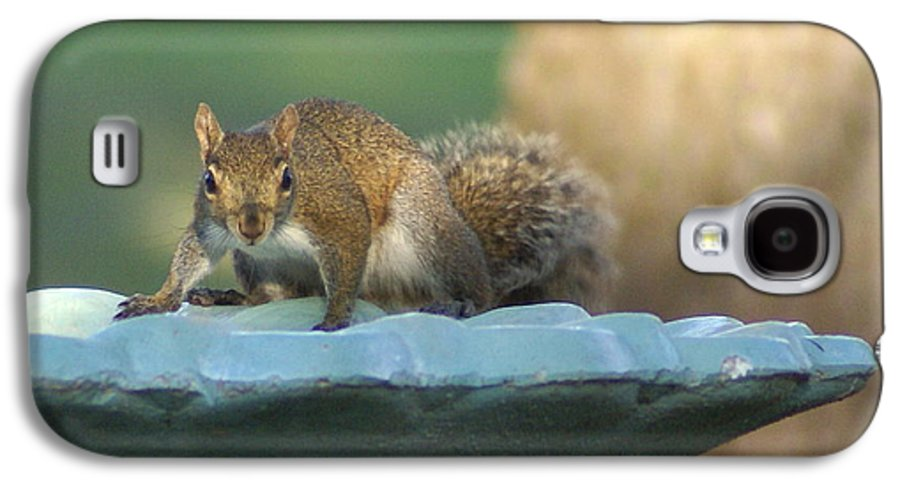 Squirrel Galaxy S4 Case featuring the painting Testing The Waters by Debbie May