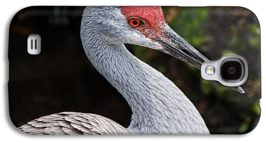 Bird Galaxy S4 Case featuring the photograph The Greater Sandhill Crane by Christopher Holmes