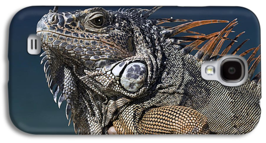 Animal Galaxy S4 Case featuring the photograph The Night Of The Iguana by Carl Purcell