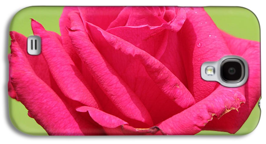 Roses Galaxy S4 Case featuring the photograph The Rose by Amanda Barcon