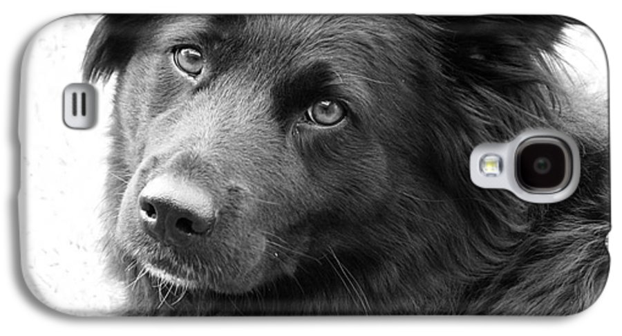 Dog Galaxy S4 Case featuring the photograph Thinking by Amanda Barcon