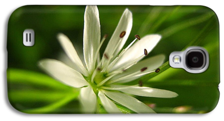 Tiny White Flower Galaxy S4 Case featuring the photograph Tiny White Flower by Melissa Parks