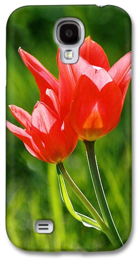 Flowers Galaxy S4 Case featuring the photograph Toronto Tulip by Steve Karol