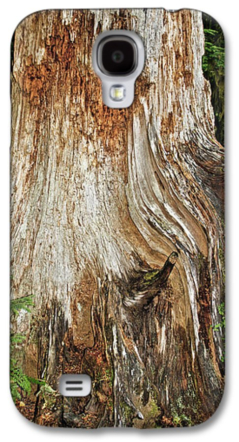 Red Cedar Tree Galaxy S4 Case featuring the photograph Trees On The Trails - Olympic National Park Wa by Christine Till