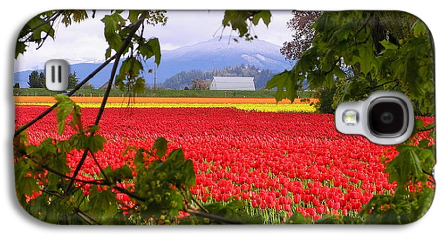 Tulip Galaxy S4 Case featuring the photograph Tulips Secret Window by Louise Magno