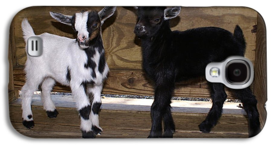 Baby Goat Twins Galaxy S4 Case featuring the photograph Twin Kids by Debbie May