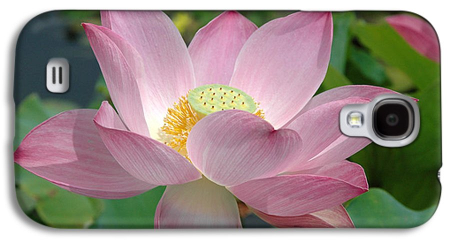 Flower Galaxy S4 Case featuring the photograph Untitled by Kathy Schumann