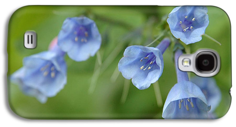 Bluebells Galaxy S4 Case featuring the photograph Virginia Bluebells I by Kathy Schumann
