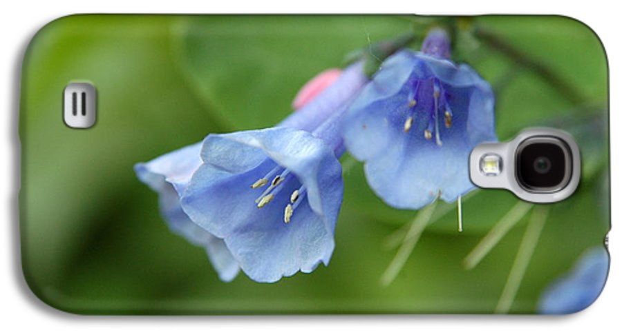 Bluebells Galaxy S4 Case featuring the photograph Virginia Bluebells II by Kathy Schumann