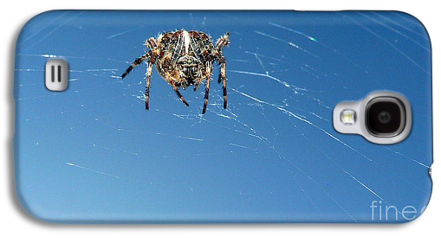 Spider Galaxy S4 Case featuring the photograph Waiting by Larry Keahey