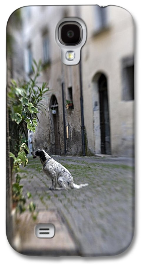 Dog Galaxy S4 Case featuring the photograph Waiting by Marilyn Hunt