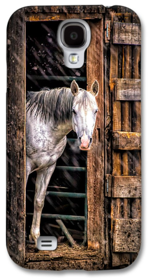 Horse Galaxy S4 Case featuring the photograph Watching The Snow Fall by Bob Orsillo