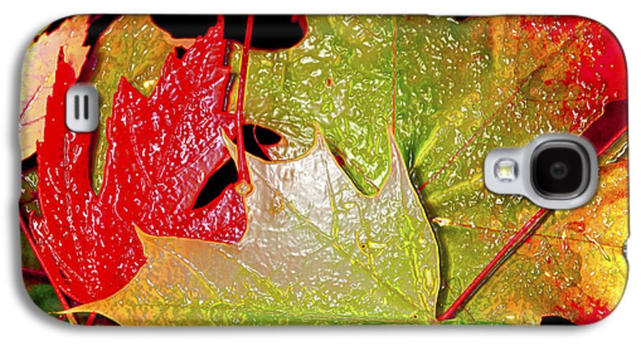 Leaves Galaxy S4 Case featuring the photograph Wet Leaves Of Fall by Larry Keahey