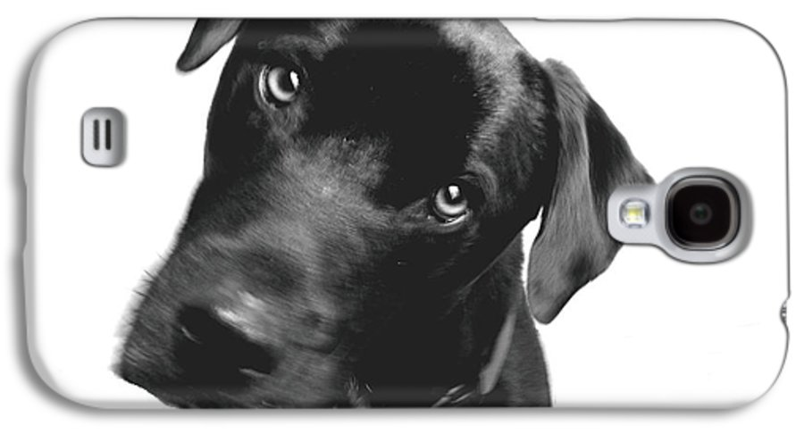Labrador Galaxy S4 Case featuring the photograph What by Amanda Barcon