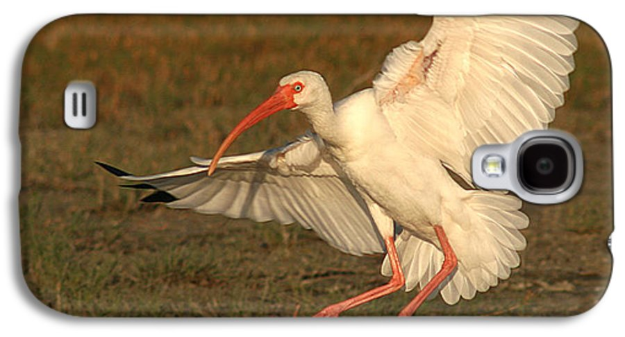 Ibis Galaxy S4 Case featuring the photograph White Ibis Landing Upon Ground by Max Allen