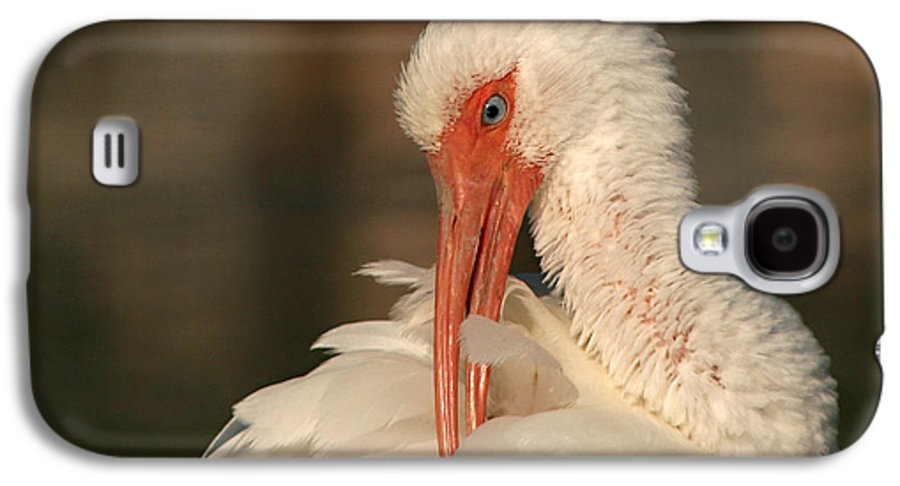 Ibis Galaxy S4 Case featuring the photograph White Ibis Placid Preening by Max Allen