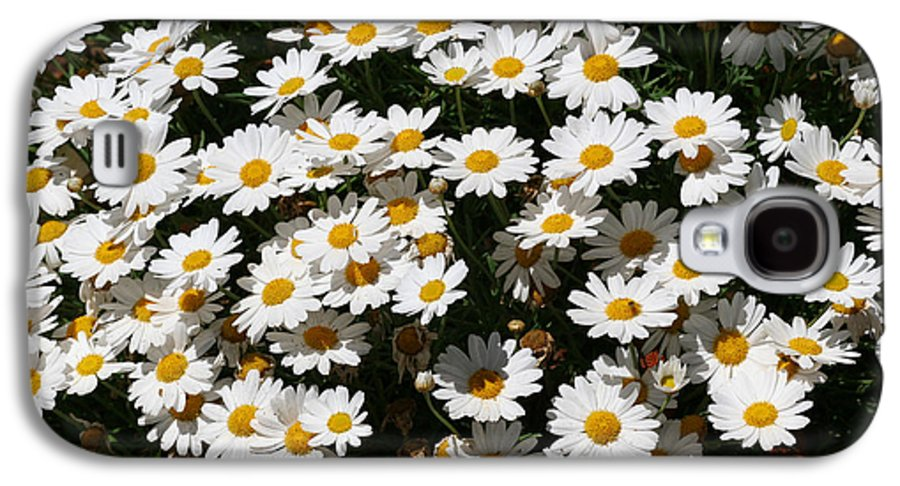 White Galaxy S4 Case featuring the photograph White Summer Daisies by Christine Till