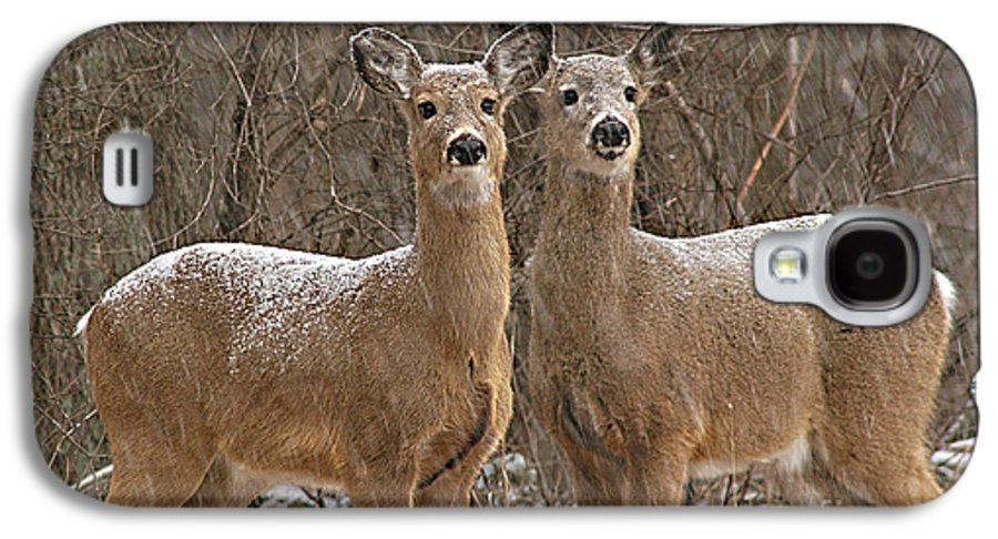 Deer Galaxy S4 Case featuring the photograph White-tailed Deer Pair Peering Out From Snowstorm by Max Allen