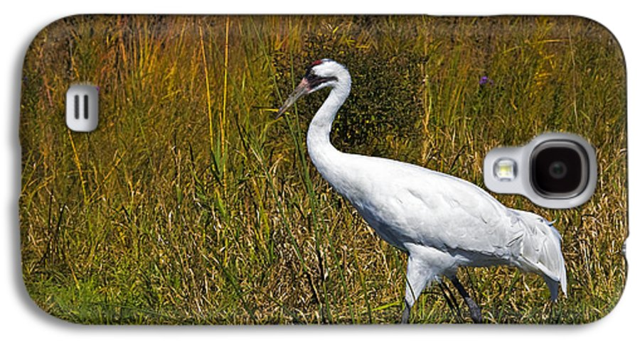 whooping Crane Galaxy S4 Case featuring the photograph Whooping Crane by Al Mueller