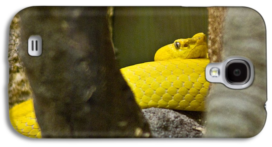 Yellow Galaxy S4 Case featuring the photograph Wicked Snake by Douglas Barnett