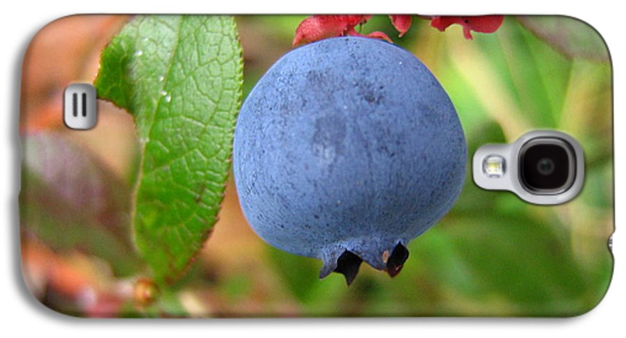 Blueberry Galaxy S4 Case featuring the photograph Wild Blueberries by Melissa Parks