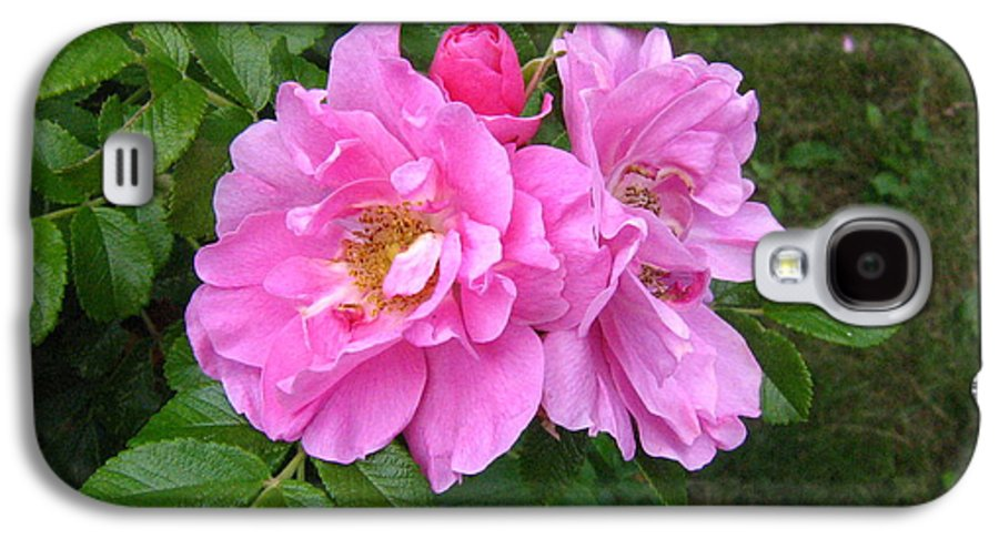 Rose Galaxy S4 Case featuring the photograph Wild Roses by Melissa Parks