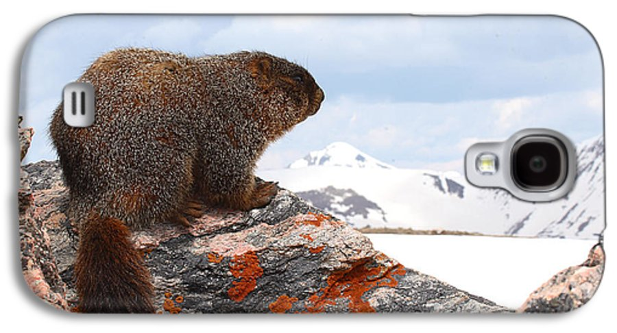 Marmot Galaxy S4 Case featuring the photograph Yellow-bellied Marmot Enjoying The Mountain View by Max Allen