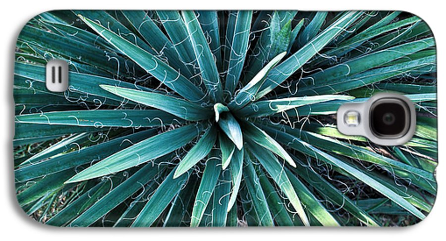 Yucca Galaxy S4 Case featuring the photograph Yucca Plant Detail by Douglas Barnett