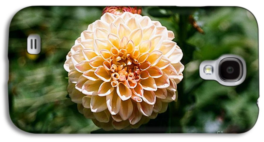 Zinnia Galaxy S4 Case featuring the photograph Zinnia by Dean Triolo
