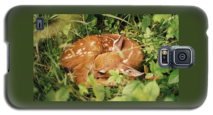 Deer Galaxy S5 Case featuring the photograph 080806-17 by Mike Davis