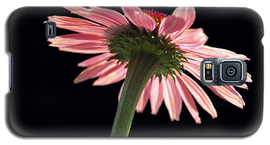 Echinacea Galaxy S5 Case featuring the photograph Coneflower by Tony Cordoza