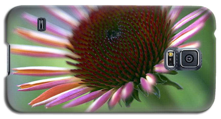 Genus Echinacea Galaxy S5 Case featuring the photograph Coneflower by Tony Cordoza