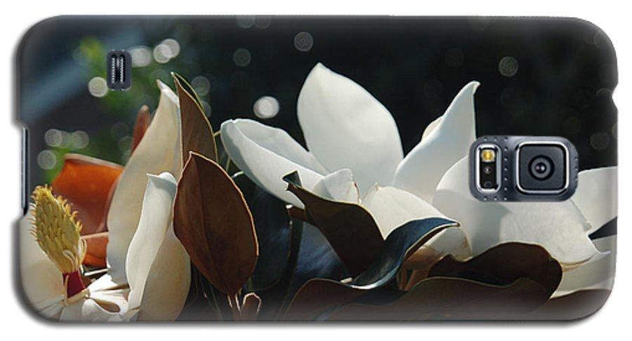 Magnolia Galaxy S5 Case featuring the photograph A Sea Of Magnolias by Suzanne Gaff