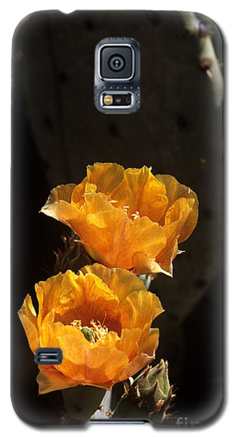 Cactus Galaxy S5 Case featuring the photograph Apricot Blossoms by Kathy McClure