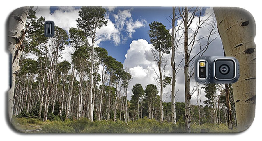 3scape Photos Galaxy S5 Case featuring the photograph Aspen Grove by Adam Romanowicz
