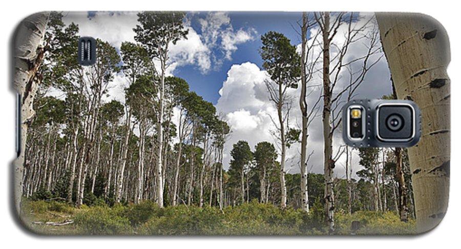 3scape Galaxy S5 Case featuring the photograph Aspen Grove by Adam Romanowicz