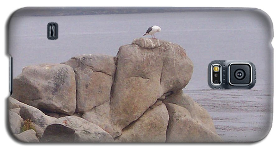 Bird Galaxy S5 Case featuring the photograph Bird On A Rock by Pharris Art