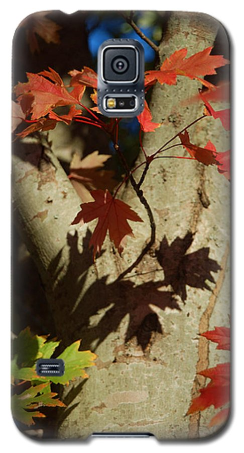 Autumn Galaxy S5 Case featuring the photograph Carolina Autumn by Suzanne Gaff