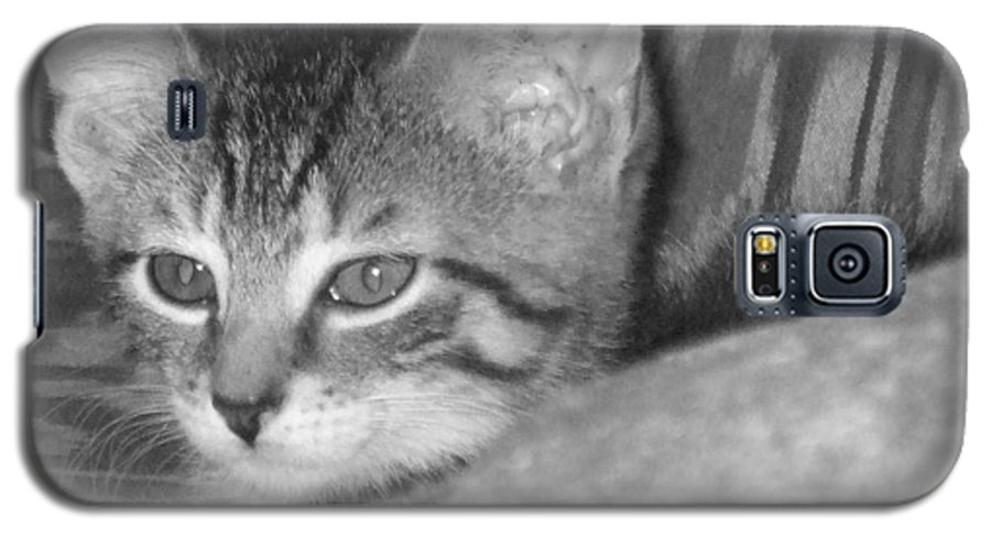 Kitten Galaxy S5 Case featuring the photograph Comfy Kitten by Pharris Art
