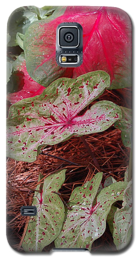 Caladium Galaxy S5 Case featuring the photograph Courtyard Caladium by Suzanne Gaff