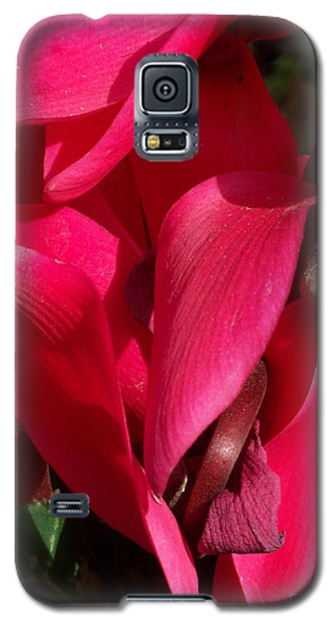 Flowers Galaxy S5 Case featuring the photograph Cyclamen by Kathy McClure