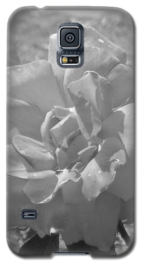 Rose Galaxy S5 Case featuring the photograph Dew Rose by Pharris Art