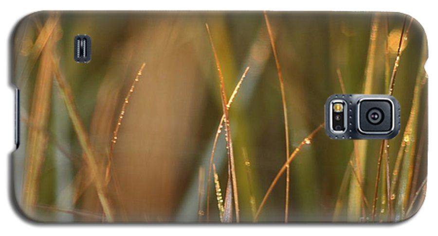 Dew Galaxy S5 Case featuring the photograph Dewy Grasses by Nadine Rippelmeyer
