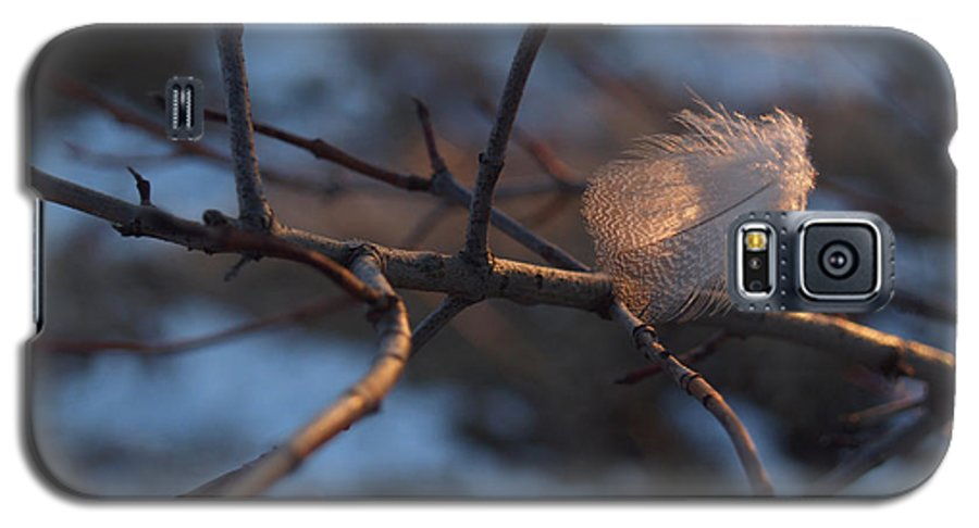 Branch Galaxy S5 Case featuring the photograph Downy Feather Backlit On Wintry Branch At Twilight by Anna Lisa Yoder