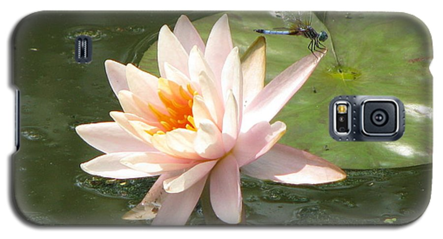 Dragon Fly Galaxy S5 Case featuring the photograph Dragonfly Landing by Amanda Barcon