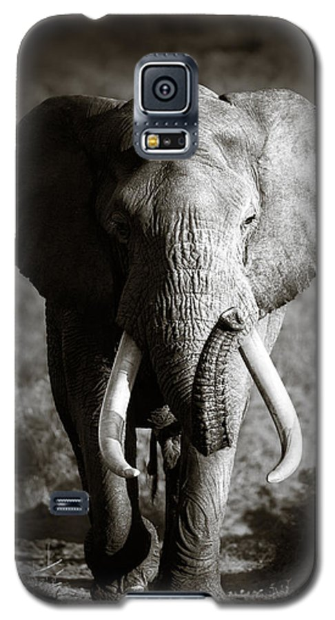 Elephant Galaxy S5 Case featuring the photograph Elephant Bull by Johan Swanepoel