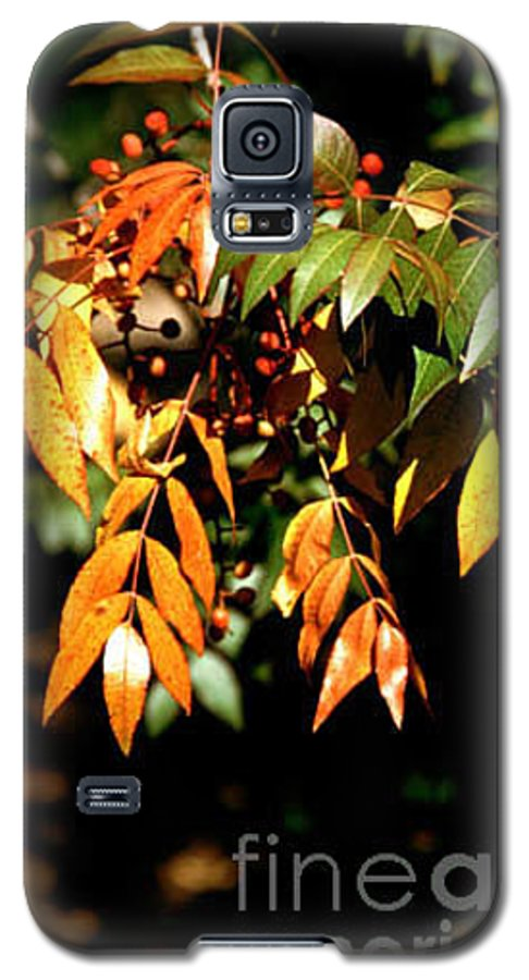 Fall Color Galaxy S5 Case featuring the photograph Fall Leaves by Kathy McClure